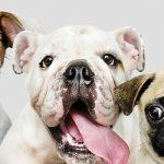 alt_tecnología_para_mascotas_wibaes